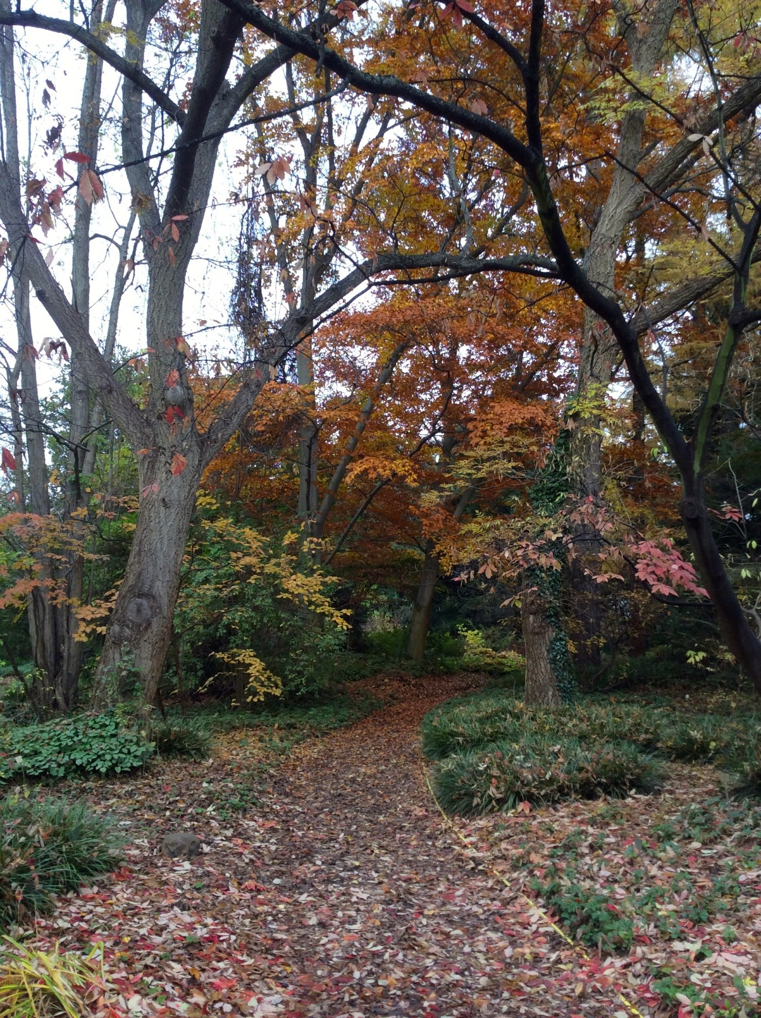 4 jours berlin sucre d orge for Jardin botanique hiver 2015